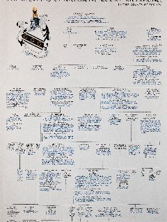 Selwyn family tree